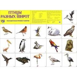 Демонстрационный плакат Птицы разных широт